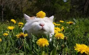 contented cat