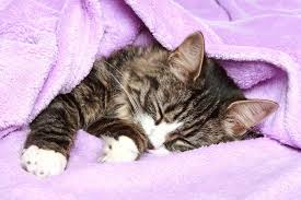 cat in blanket 2