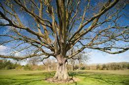 tree laid bare