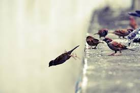 birds learn to fly